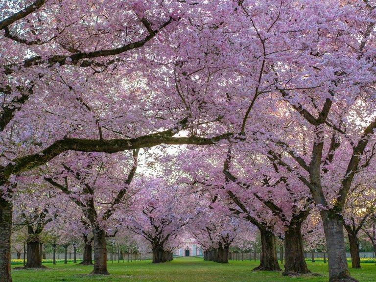 trees-4092265_1280