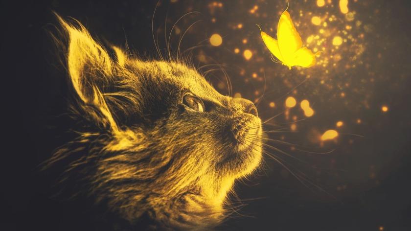 cats-5078448_1280